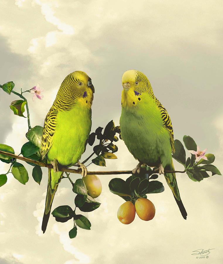 Parrots Digital Art - Budgerigars In Kumquat Tree by IM Spadecaller