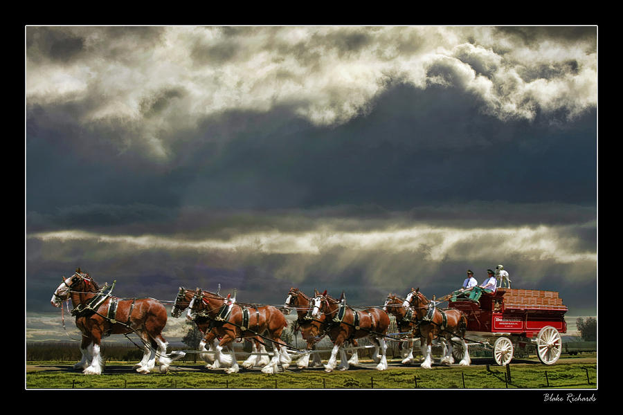 Budweiser Clydesdales Photograph By Blake Richards