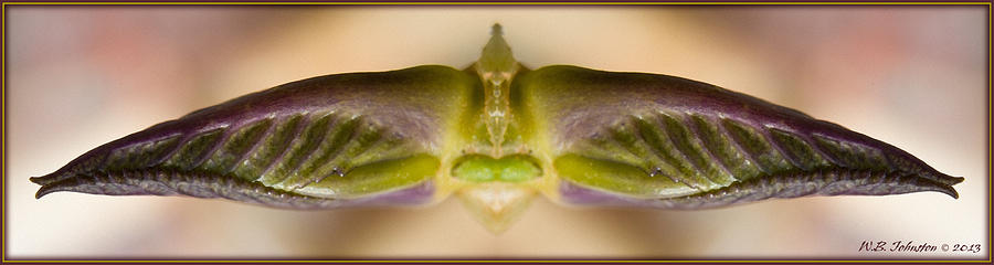 Growth Photograph - Budwing by WB Johnston