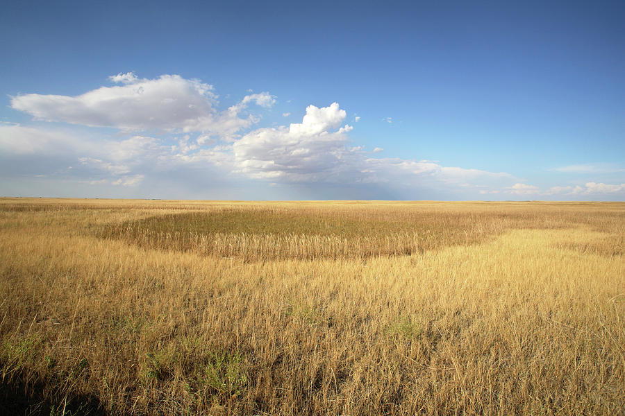 Landscape Photograph - Buffalo Gap National Grassland by Peter Falkner/science Photo Library