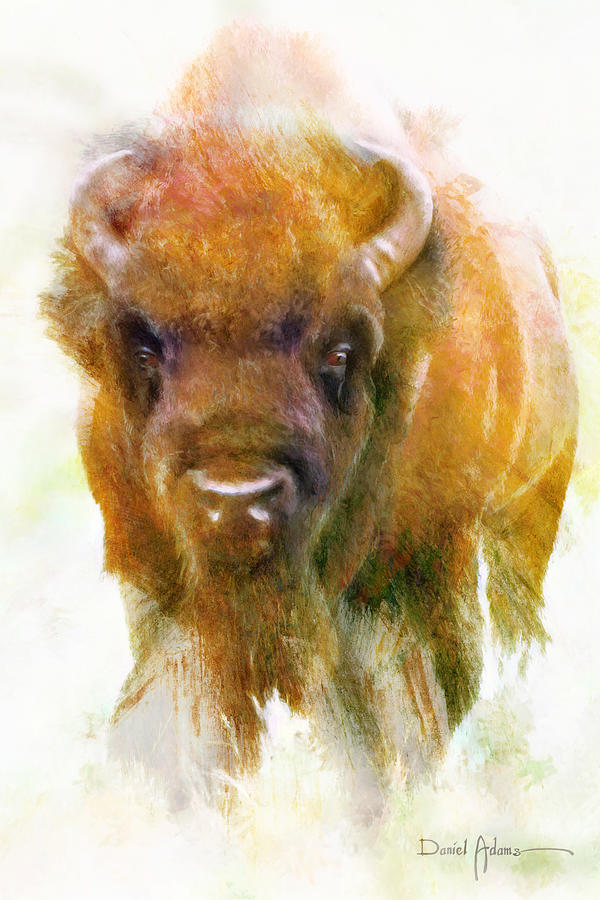 Da176 Buffalo II Daniel Adams by Daniel Adams