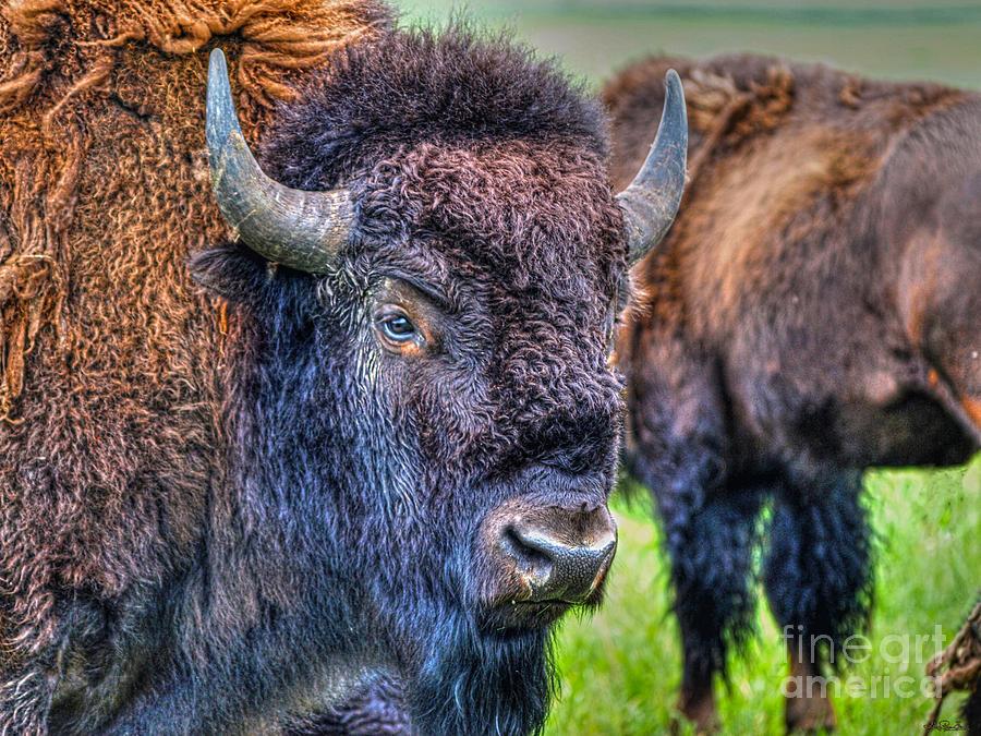 Buffalo Photograph - Buffalo Warrior by Skye Ryan-Evans