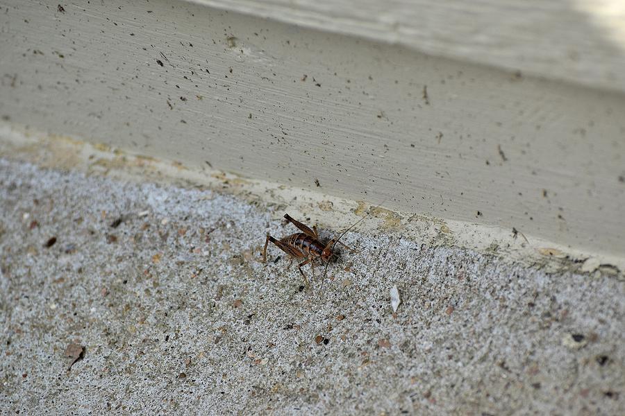 Bug Art 1 Photograph