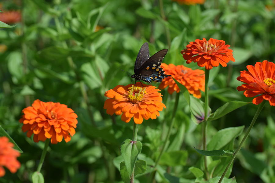 Bug Art 298 Photograph