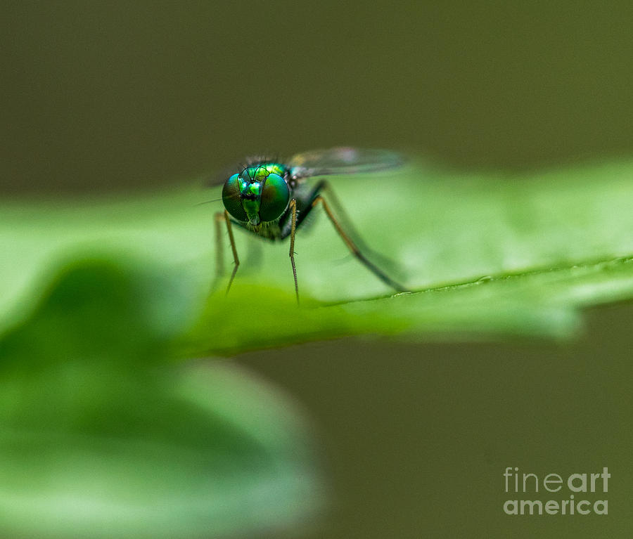 Bug Eyed Photograph