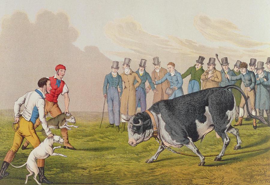 Henry Thomas Alken Painting - Bull Baiting by Henry Thomas Alken