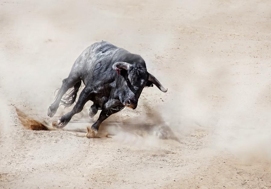 Bull charging across sand creating dust cloud Photograph by Juanluis_duran