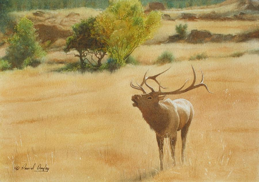 Bull Elk at Moraine Park by Daniel Dayley