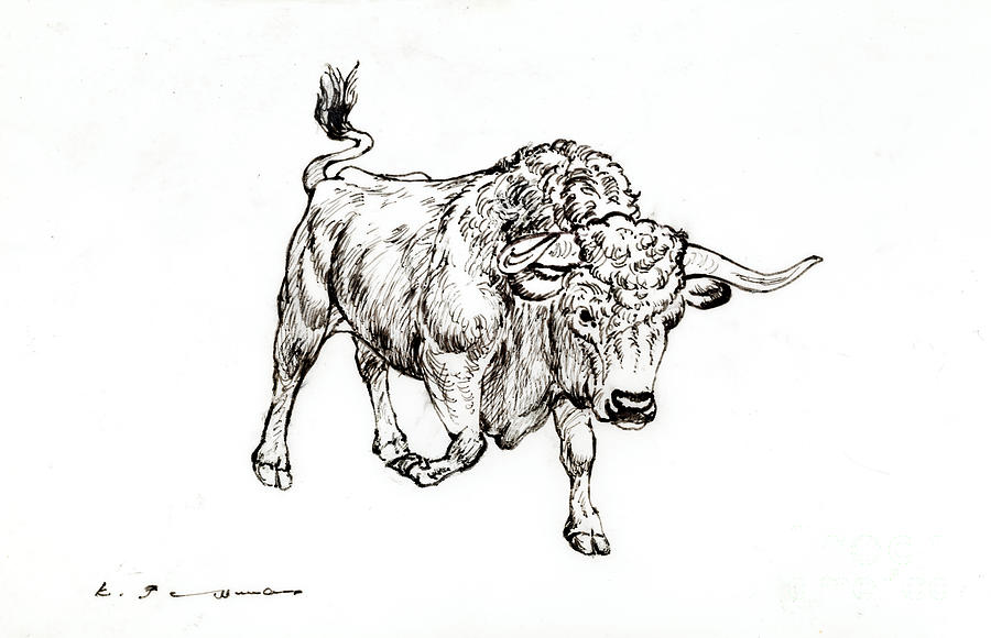Bull Drawing - Bull by Kurt Tessmann