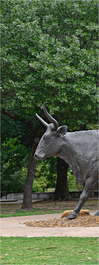 Waco Photograph - Bull Market Quadriptych 1 Of 4 by Christine Till