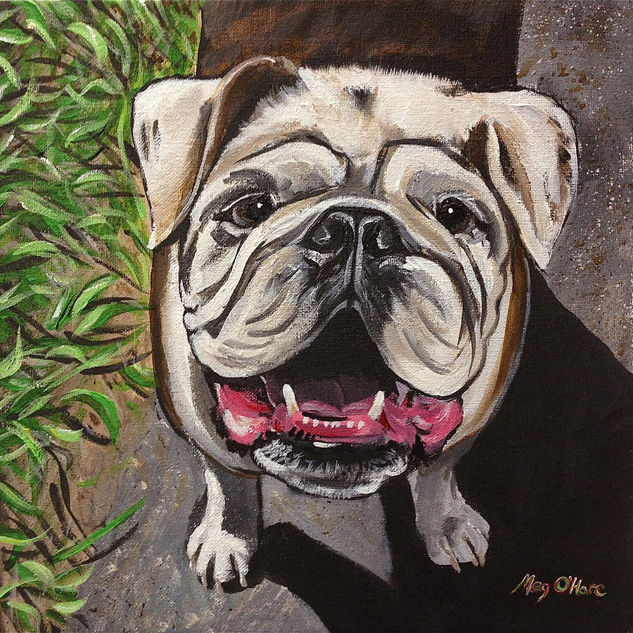 Bulldog by Meghan OHare