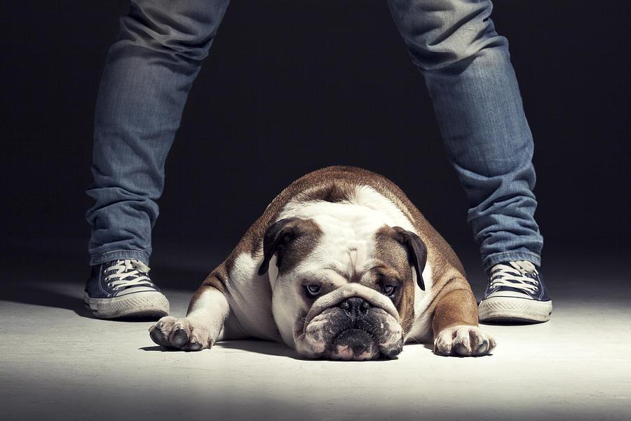 Dog Photograph - Bulldog by Samuel Whitton