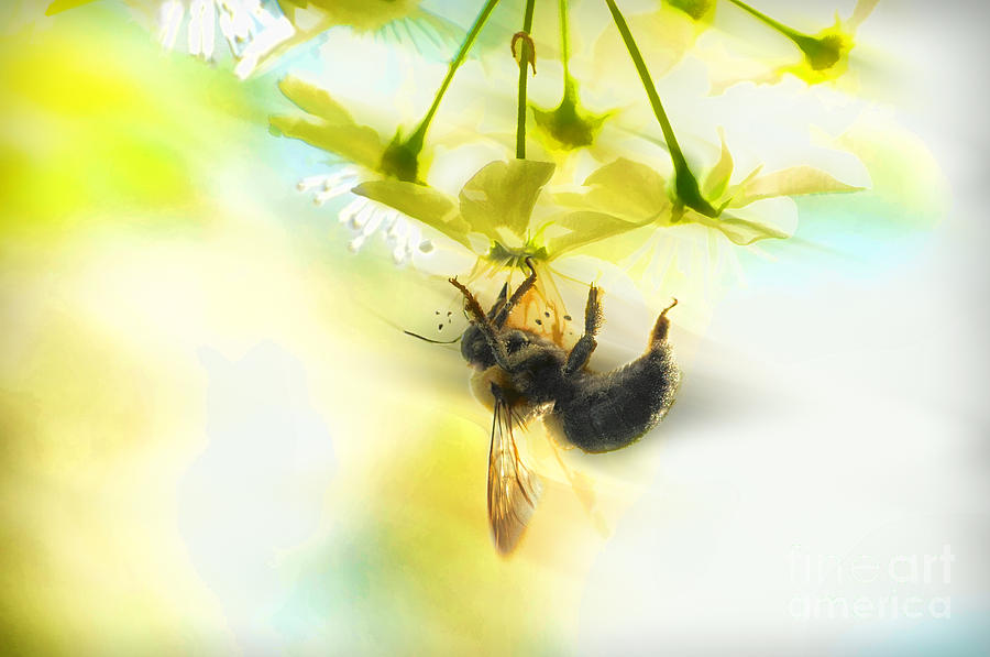 Bubble Bee Photograph - Bumble Going In For The Nectar by Dan Friend
