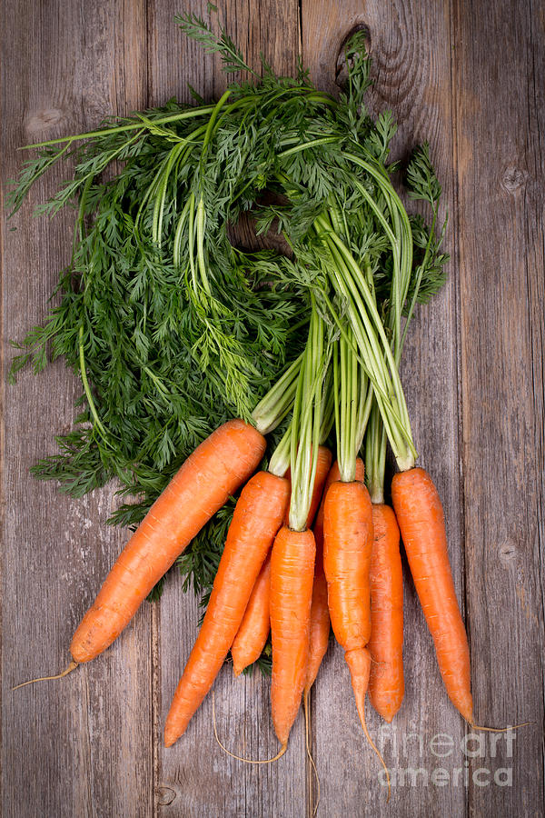 Agriculture Photograph - Bunched carrots by Jane Rix
