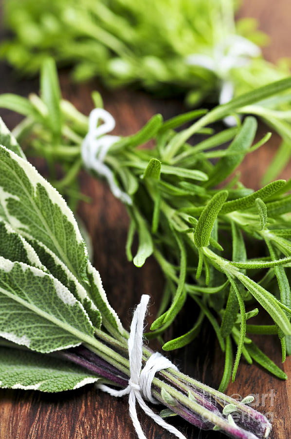 Herb Photograph - Bunches Of Fresh Herbs by Elena Elisseeva