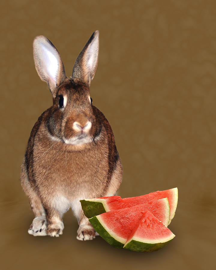 Animals Photograph - Bunny Snack by Diane Bell