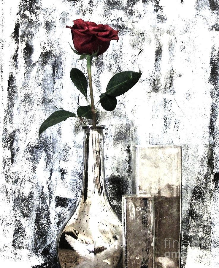 Photo Photograph - Burgundy Beauty Rose by Marsha Heiken
