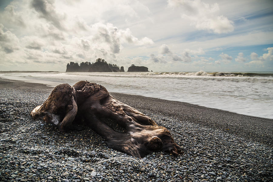 Buried Photograph by Kristopher Schoenleber