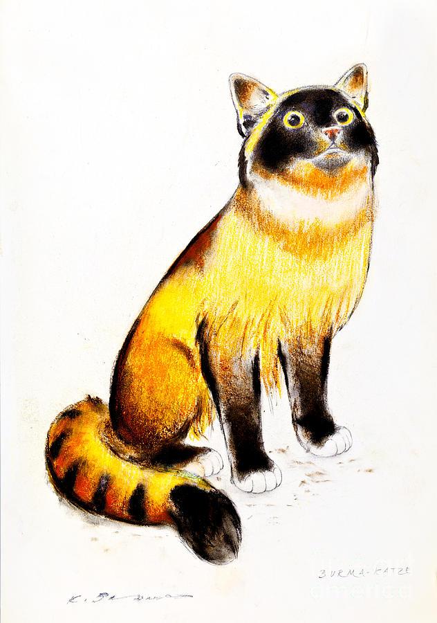 Burmese Drawing - Burmese Cat by Kurt Tessmann