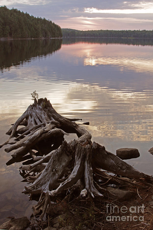 Algonquin Park Photograph - Burnt Island Lake Sunset by Chris Hill