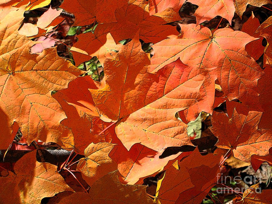 Autumn Photograph - Burnt Orange by Ann Horn
