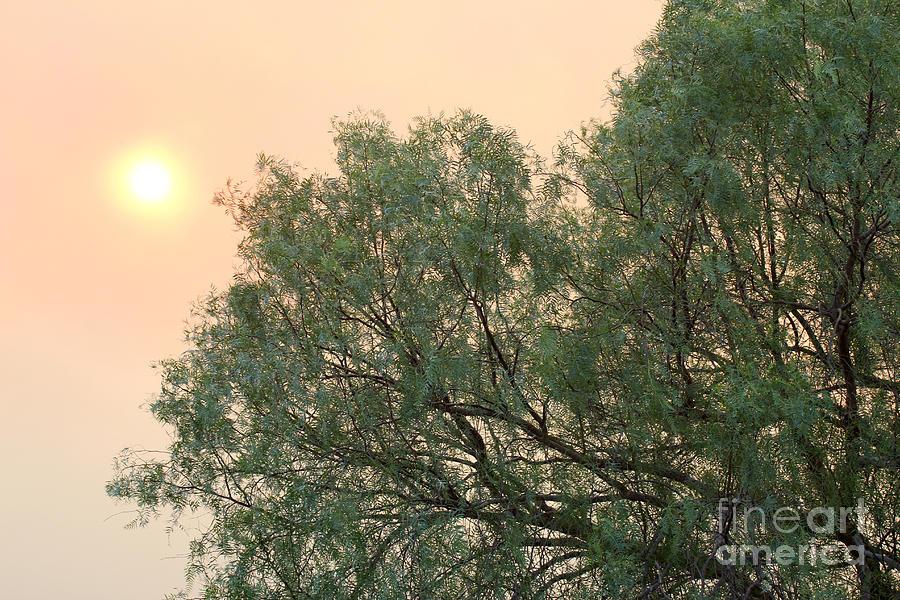 Burnt Sky 2 by Balanced Art