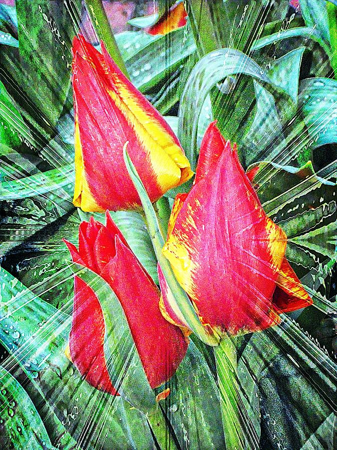Tulips Photograph - Burst Of Color by Cathie Tyler