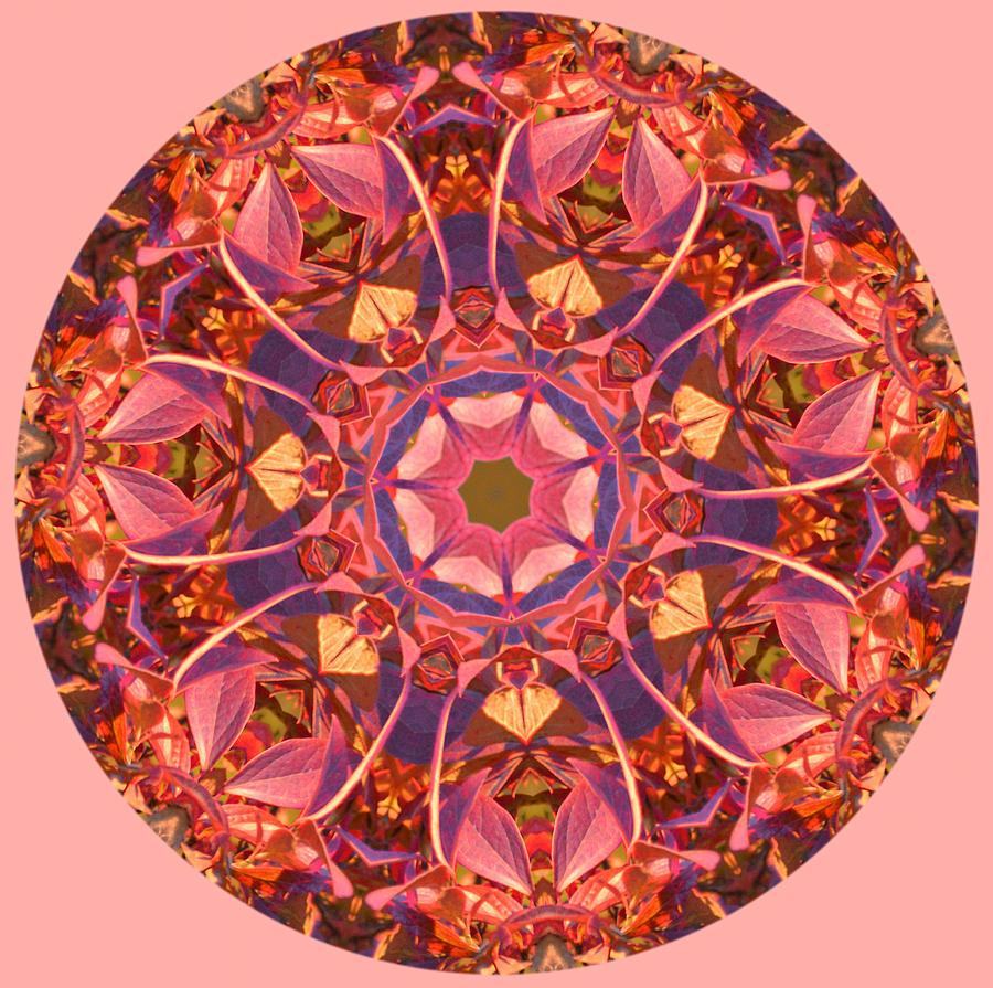 Fall Photograph - Burst of Fall Mandala by Beth Sawickie
