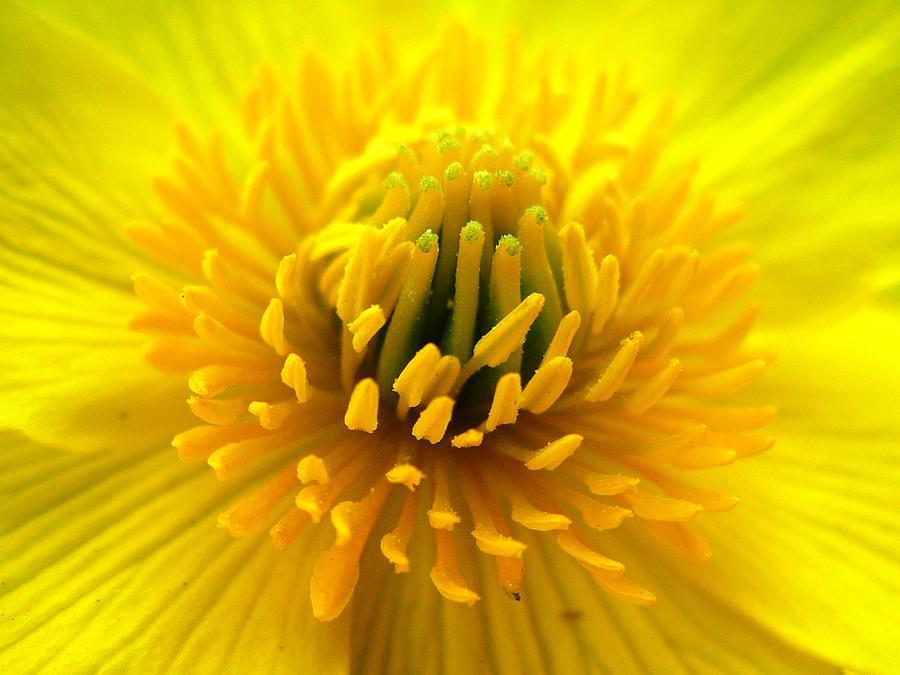 Burst of yellow by Nigel Cameron