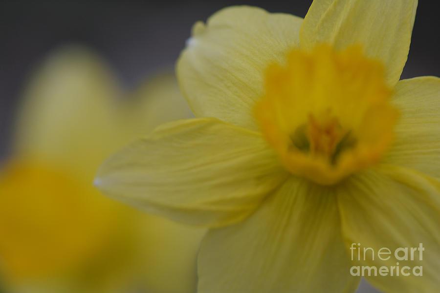 Bursting into Spring by Barb Dalton