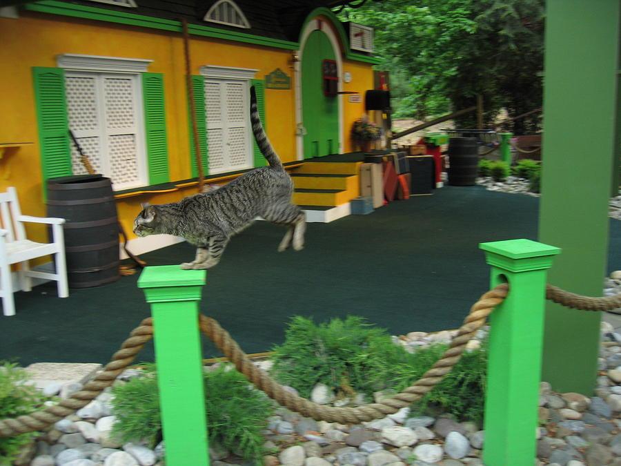 Busch Photograph - Busch Gardens - Animal Show - 121239 by DC Photographer