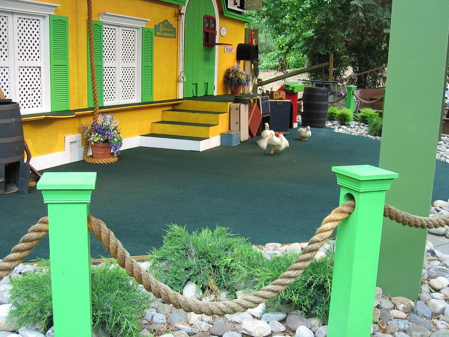 Busch Photograph - Busch Gardens - Animal Show - 121241 by DC Photographer