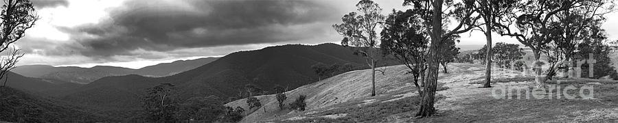 Bush Pano Photograph by David Benson