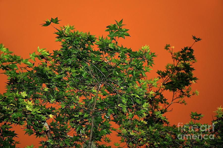 Bushfire Photograph - Bushfire Skies by Kaye Menner