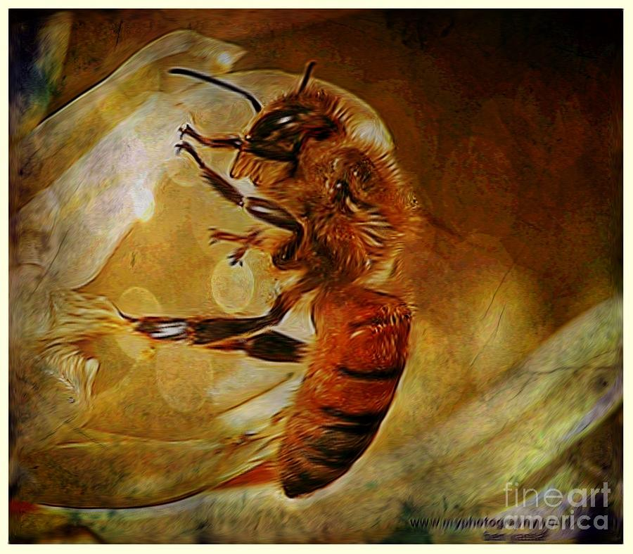 Bee Photograph - Busy Bee by Ben Yassa