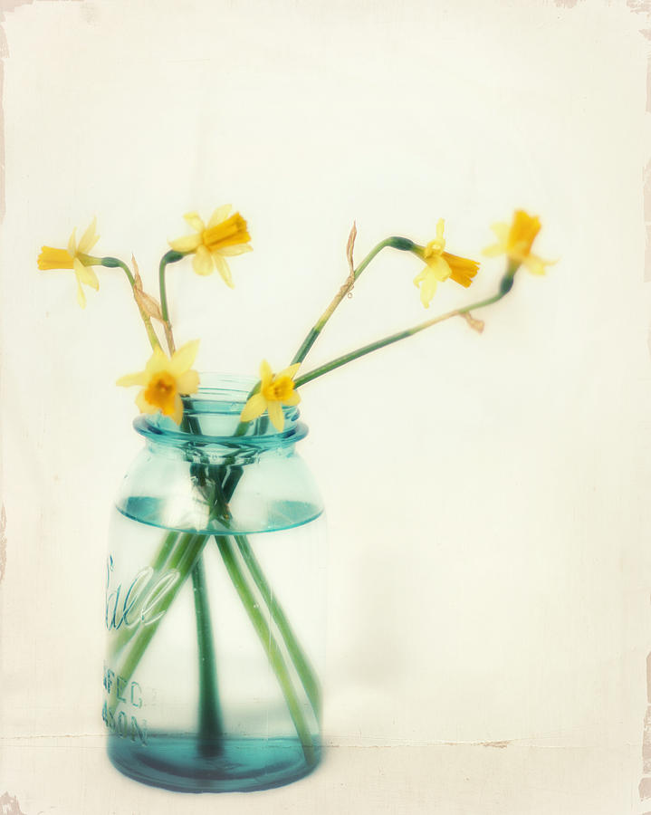 Daffodil Photograph - But I Love You Still by Amy Tyler