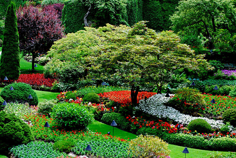 Butchart Gardens Photograph - Butchart Gardens by Lisa Phillips
