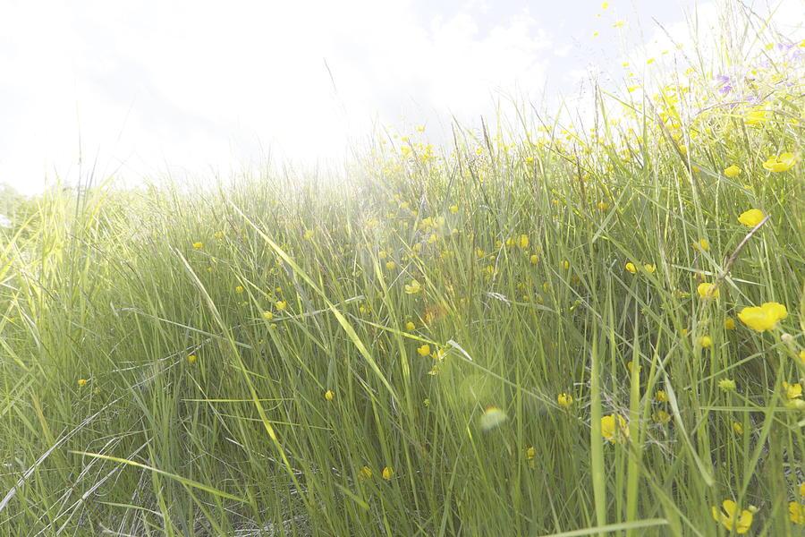 Abundance Photograph - Buttercups Flowers And Sun Flare by Ulrich Kunst And Bettina Scheidulin