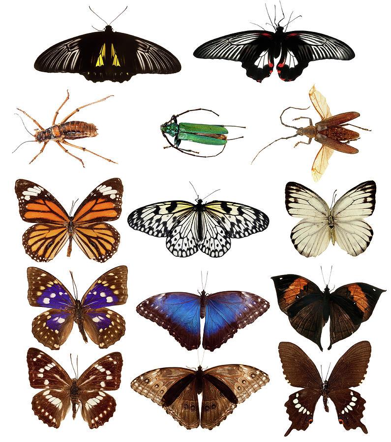 Butterflies And Beetles Photograph by Mashabuba