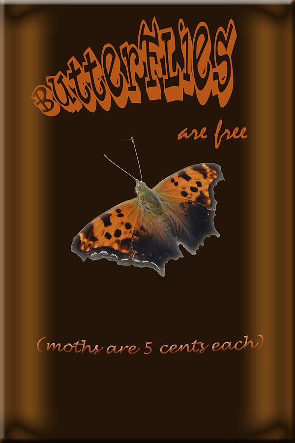 Digital Photograph - Butterflies Are Free by Larry Bishop