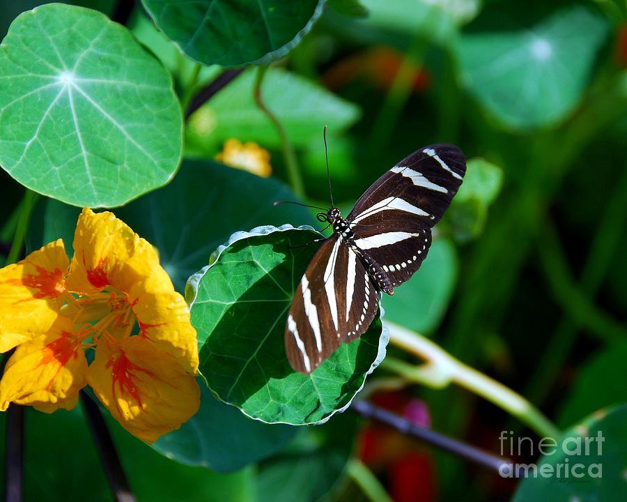 Nature Photograph - Butterflies Are Free by Mel Steinhauer