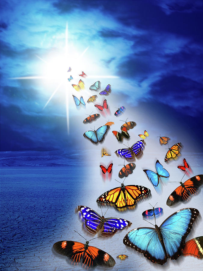 Vertical Photograph - Butterflies Flying To The Light Fantasy by Animal Images