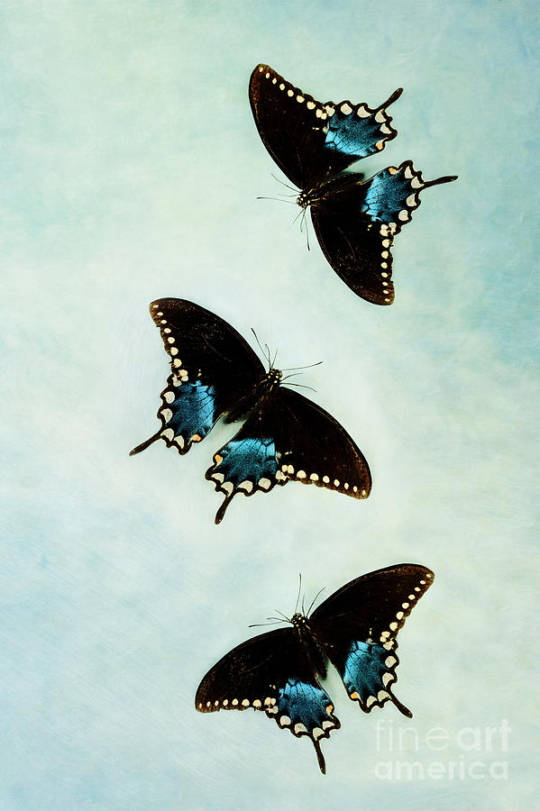 Abstract Photograph - Butterflies In Flight by Stephanie Frey