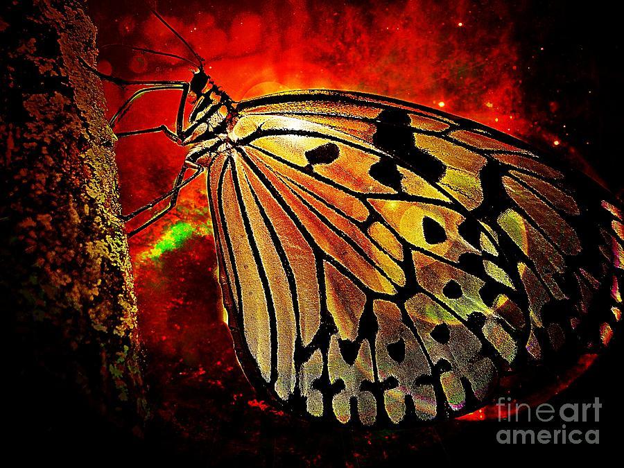 Butterfly Photograph - Butterfly 1 by Ben Yassa