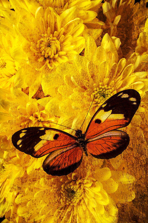 Abstract Photograph - Butterfly Abstract by Garry Gay