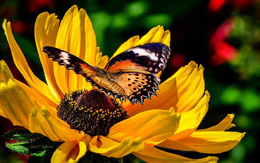 Butterfly Photograph - Butterfly And Bloom by Julie Palencia