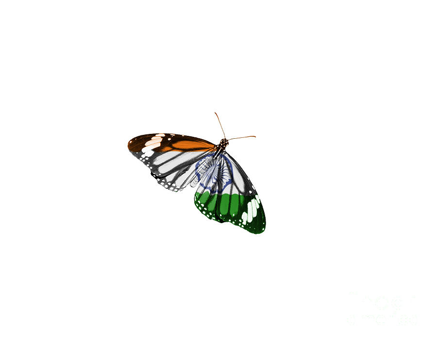 Indian Flag Butterflies: Butterfly And Indian National Flag Tiranga Photograph By
