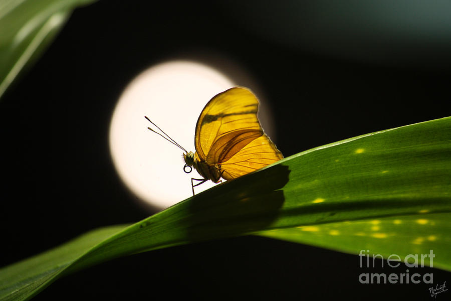 Butterfly And The Moon Photograph