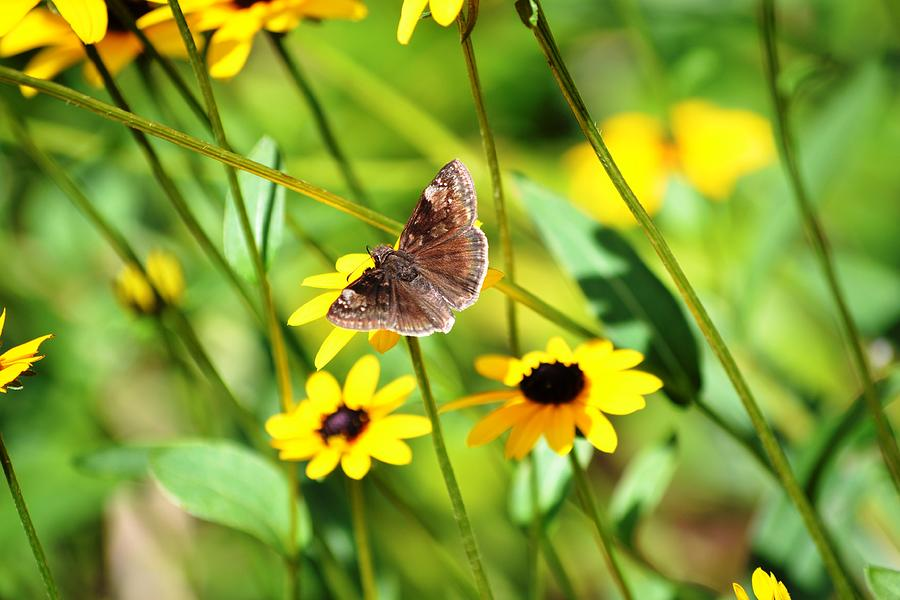 Yellow Flowers Photograph - Butterfly And Yellow Flowers by Carlee Ojeda