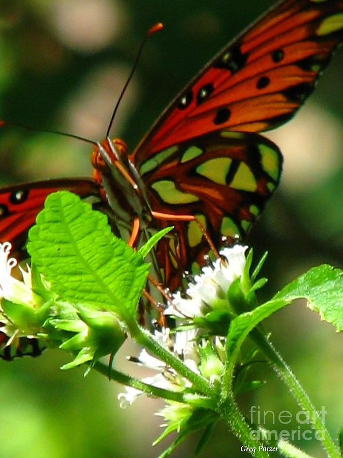 Patzer Photograph - Butterfly Art by Greg Patzer